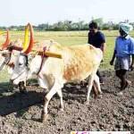 மெக்கானிக்கல் இன்ஜினியரிடம் விவசாயம் கற்கும் கார்த்தி குடும்பத்தார்